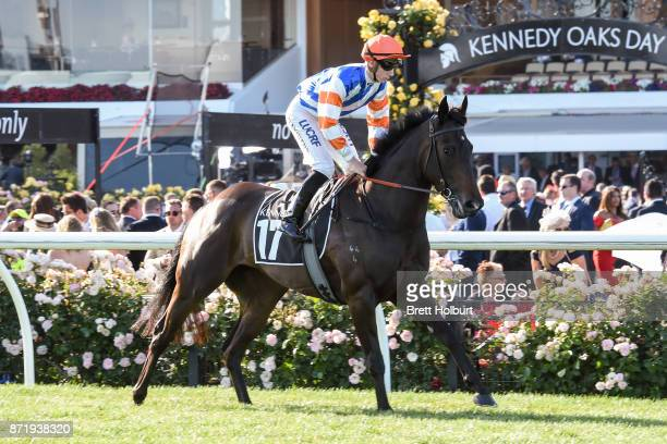 Elusive Melody ridden by Beau Mertens heads to the barrier before the Kennedy Plate at Flemington Racecourse on November 09 2017 in Flemington...