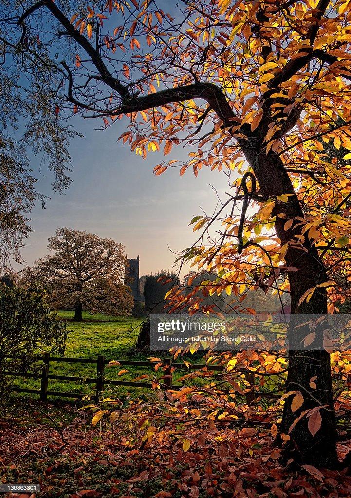 Elvaston autumn days : Stock Photo