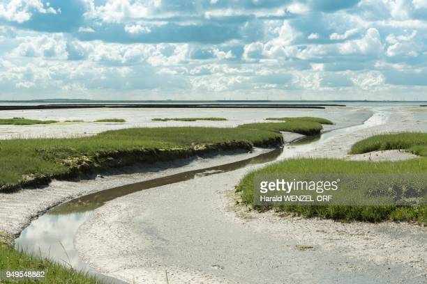 Embankment foreland Hamburger Hallig, nature reserve, national park Wadden Sea, UNESCO World Heritage Site, Reussenkoege, Schleswig-Holstein, Germany