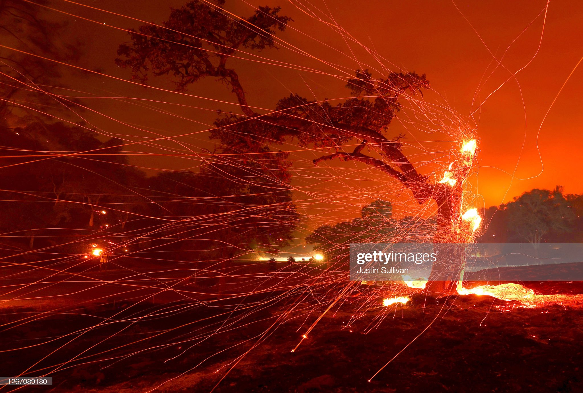 Sparks from wildfire fly off burning tree and red landscape