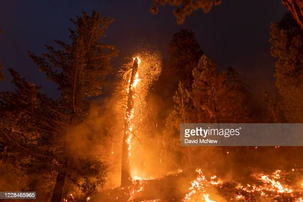Embers fly from a burning tree as the Bobcat Fire continues to devour the Angeles National Forest on September 11, 2020 north of Monrovia,...