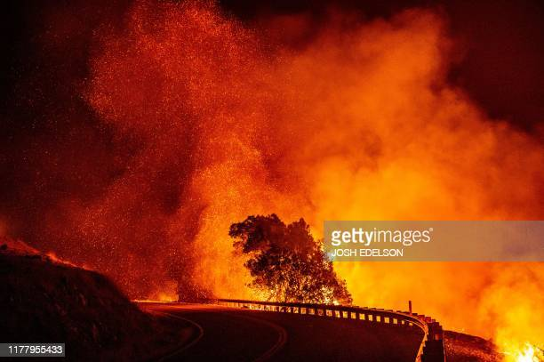 Embers rise above a burning tree along a road during the Kincade fire near Geyserville California on October 24 2019 fastmoving wildfire roared...