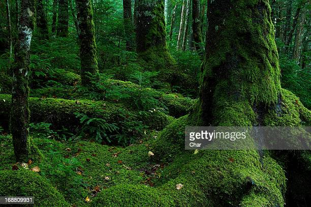 embrace - moss stock pictures, royalty-free photos & images