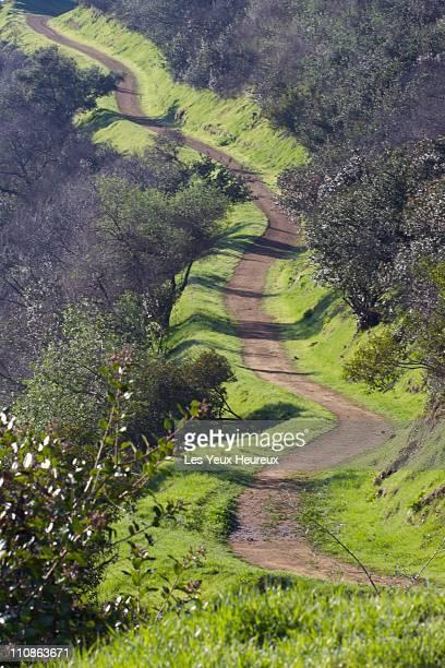 Emerald Trail of winter