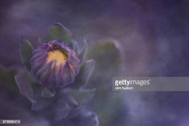 emerging beauty - european larch stock pictures, royalty-free photos & images