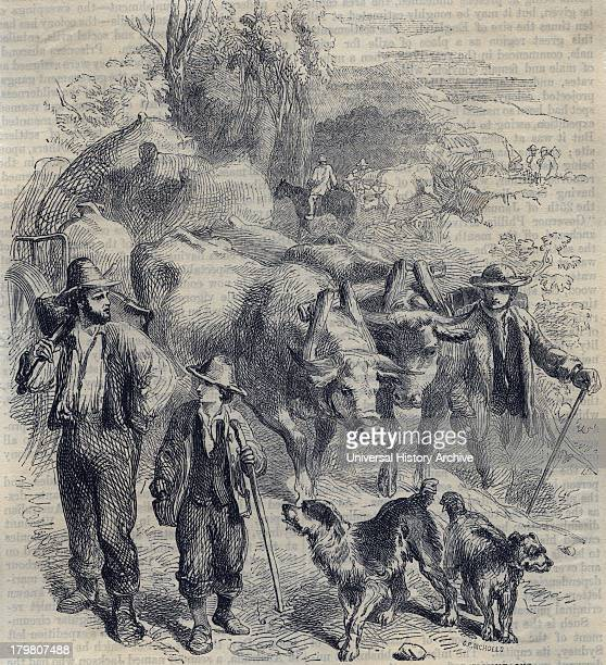 Emigrants to Australia taking their first crop of wool to Sydney Engraving 1852