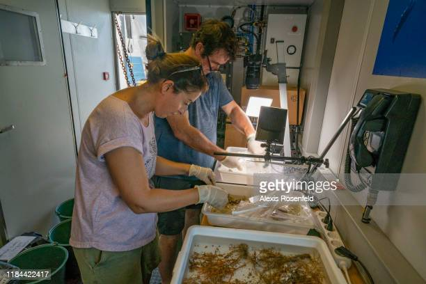 Emilie Boissin research engineer and Serge Planes research director are organizing species collected on the Amazon reef on September 25 2019 off the...