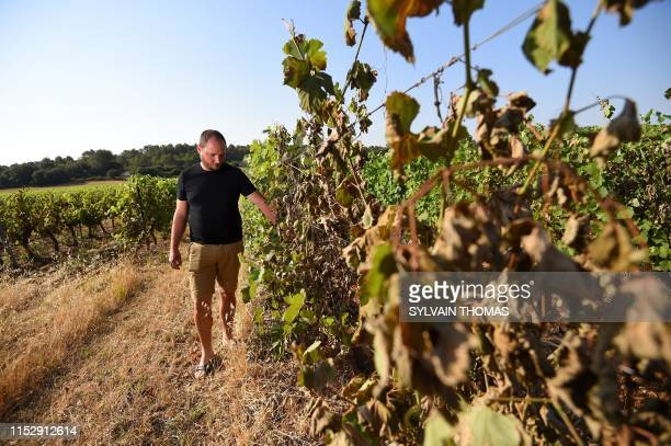 Emilien Fournel wine producer looks at his burnt vines on June 30 2019 in Sussargues near Montpellier in the South of France Fournel estimates that...