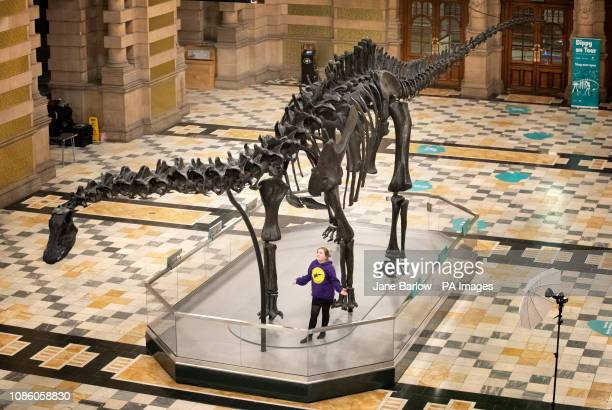 Emillie McQuade from Sunnyside Primary School takes a closer look at Dippy the Natural History Museum London's famous diplodocus skeleton after it...
