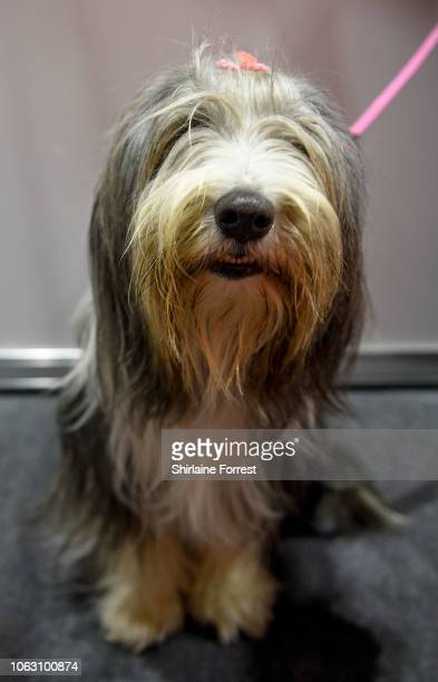 Emily the Bearded Collie at The National Pet Show at NEC Arena on November 03 2018 in Birmingham England