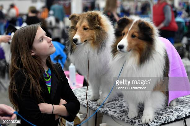 Emma Bernard left helps watch over her dogs Chance 11 months middle and Wendall right as they wait to compete during the Colorado Kennel Club Dog...