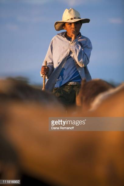 Emmanuel watches his grandmother's goats on November 15 2009 in the fields of San Pablo Huixtepec Emmanuel's father abandoned his family when he...