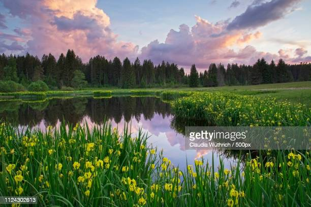 emmental - bog stock photos and pictures