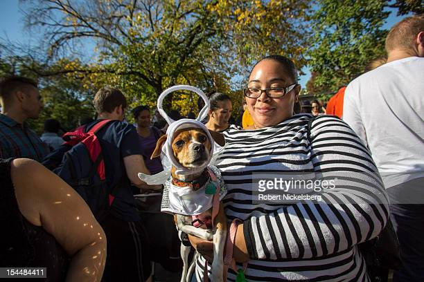 Emmy a Jack Russell terrier mix dressed as an angel poses for a photo at the 22nd Annual Tompkins Square Halloween Dog Parade on October 20 2012 in...