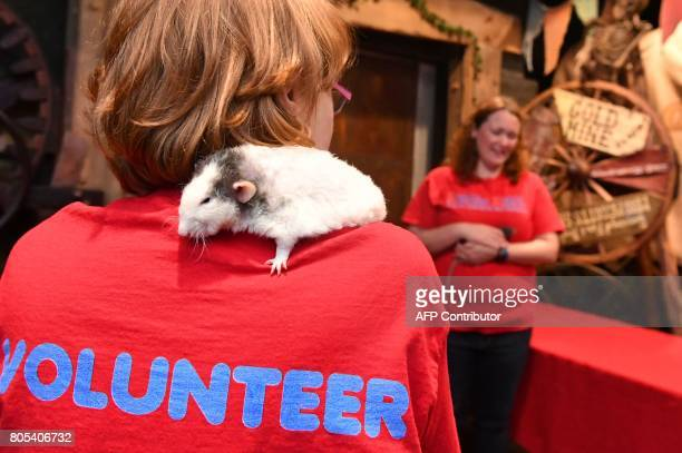 Emory the rat stands on the shoulders of Molly Darling Roque during a popup Rat Cafe at the San Francisco Dungeon in San Francisco California on July...
