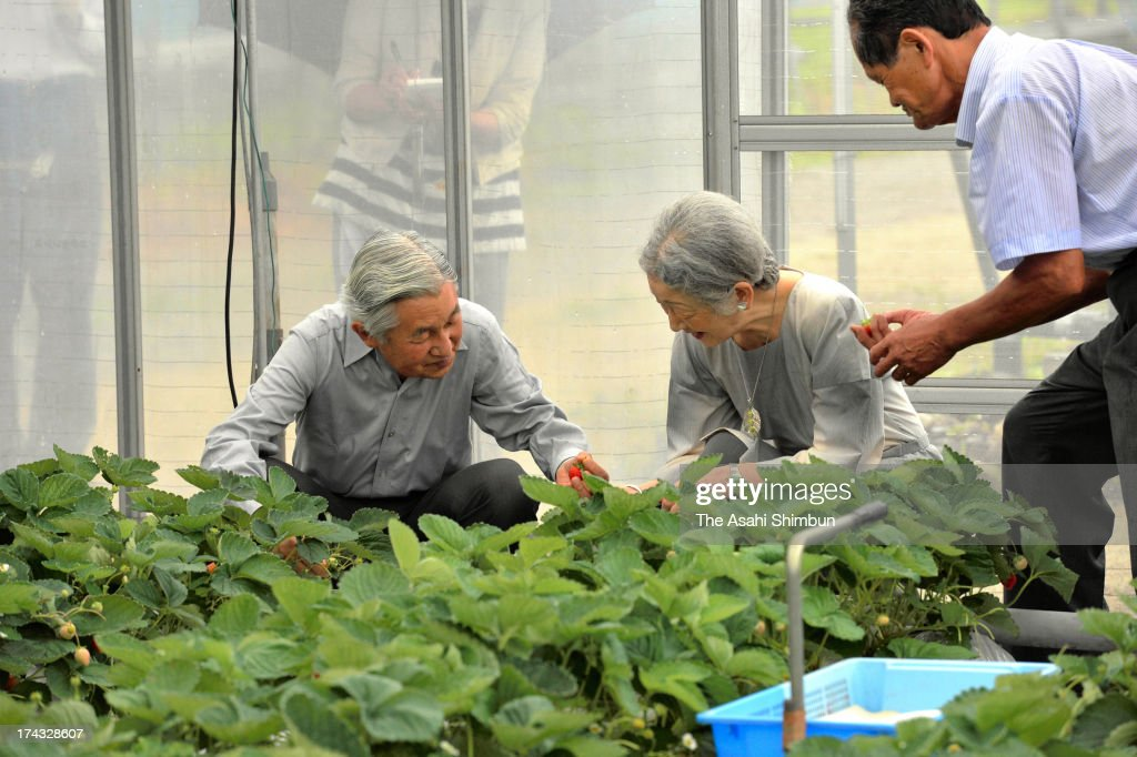 Emperor Akihito and Empress Michiko crop strawberry during their visit to a farmer on July 24, 2013 in Nasushiobara, Tochigi, Japan. The Emperor and Empress will stay at the Nasu Imperial Villa until July 26.
