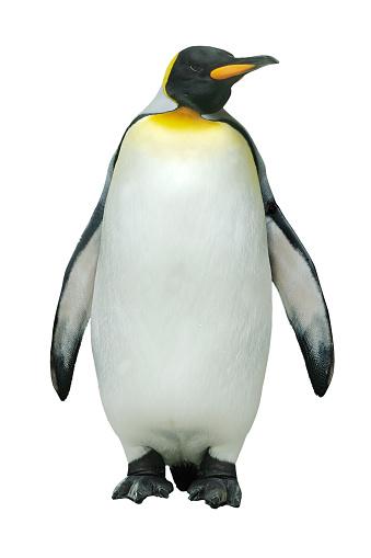 Emperor penguin against white background 157580988