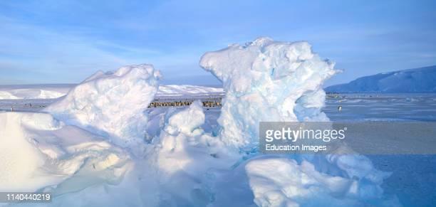 Emperor Penguin Aptenodytes forsteri colony at the DawsonLambton Glacier Weddell Sea Antarctica