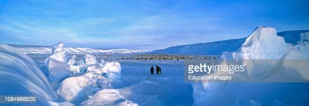 Emperor Penguin Aptenodytes forsteri colony Dawson Lambton Glacier Weddell Sea Antarctica