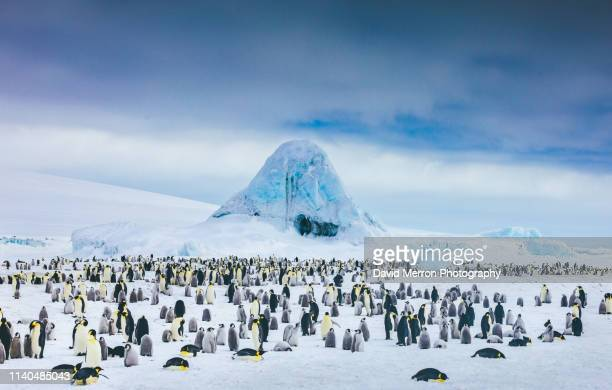 emperor penguin colony - antarctique photos et images de collection