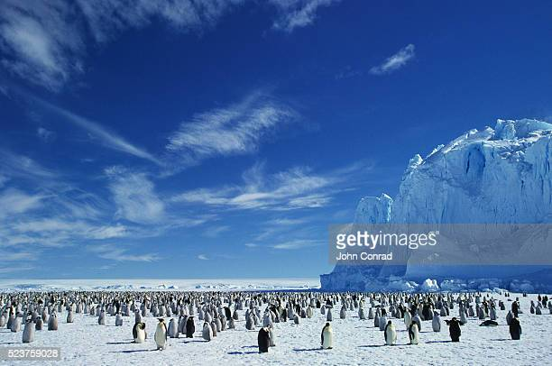 emperor penguin colony - rookery stock pictures, royalty-free photos & images