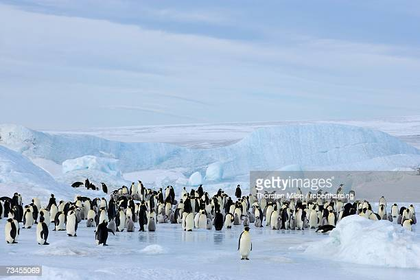 emperor penguin colony (aptenodytes forsteri), snow hill island, weddell sea, antarctica, polar regions - weddell sea - fotografias e filmes do acervo