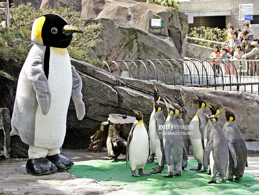 Emperor penguins give attention to a hea : News Photo