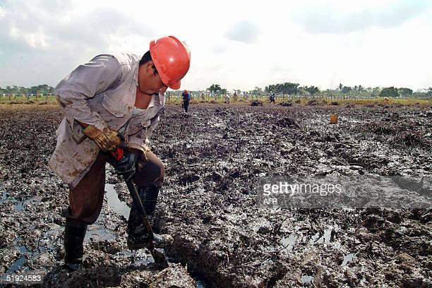 Empleados de la empresa estatal Petroleos Mexicanos trabajan en un derrame de crudo en el poblado La Ceiba en el municipio de Cunduakan estado de...