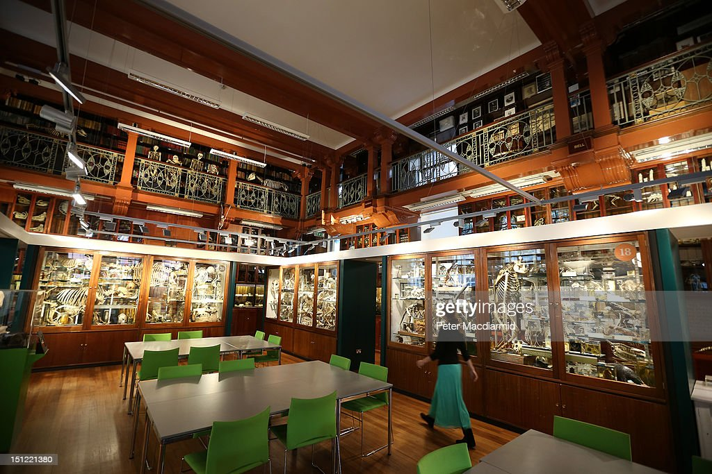 The Grant Museum Of Zoology Houses A Collection Of Weird And Wonderful Artefacts : News Photo
