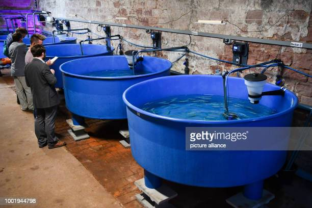 Employees and journalists standing next to a pool of the recirculation system filled with whitefish and crayfish in Landau Germany 12 July 2017 As...