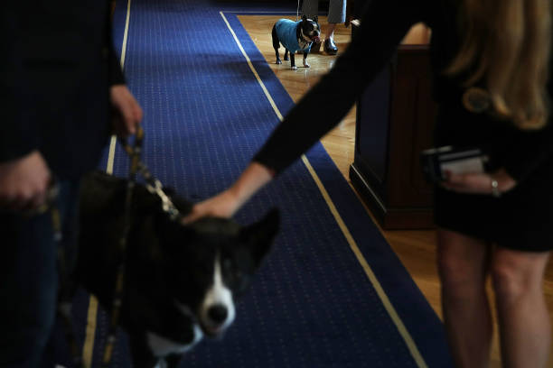 U S Department Of Interior Holds A Take Your Dog To Work Day Photos And Images Getty Images
