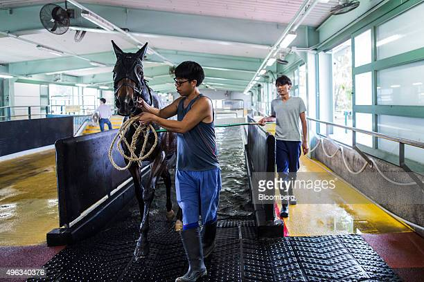 Employees guide a horse out of an equine swimming pool at the Sha Tin Racecourse, operated by Hong Kong Jockey Club, in Hong Kong, China, on...