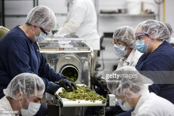 Employees inspect and sort marijuana buds for packaging at the Canopy Growth Corp facility in Smith Falls Ontario Canada on Tuesday Dec 19 2017...