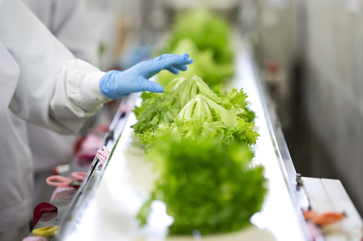 Employees inspect lettuce prior to packaging - gettyimageskorea