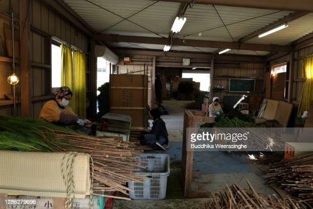 Employees of Nagomi Farm sort and clean freshly harvested three-year-old Wakamatsu trees on a production line in preparation for shipping on November...