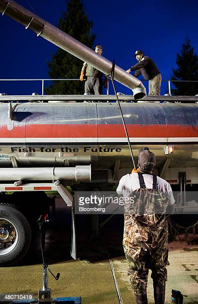 Employees of the California Department of Fish and Wildlife and The US Fish and Wildlife Service load Chinook salmon into a tanker for transport in...