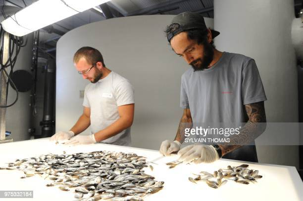 Employees of the 'Les poisssons du soleil' entreprise based in Frontignan sort bream alluvions out on June 14 in Herault southern France