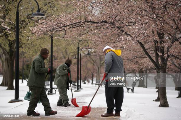 Employees of the National Park Service shovel snow as they clear up a path under early blossom cherry trees at Tidal Basin March 14 2017 in...
