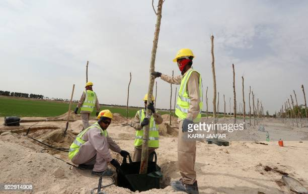 Employees plant a tree at the Supreme Committee for Delivery and Legacy Tree Nursery in Doha on February 22 2018 The nursery is growing trees and...