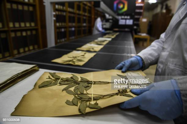 Employees put herbarium paper sheets on a conveyer belt on their way to be digitalizated on March 12 2018 at the Claude Bernard LyonI university in...