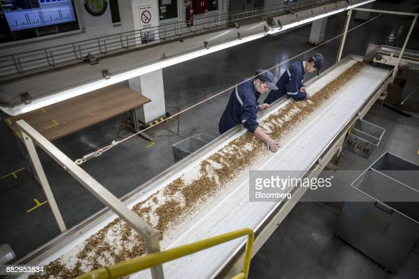 Employees sort shredded Green Virginia tobacco leaves for processing on a conveyor belt at the Japan Tobacco Inc cigarette plant in Senta Serbia on...