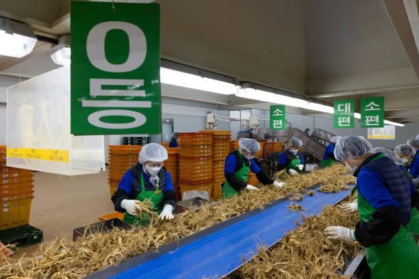 KOR: Inside Korean Ginseng Factory