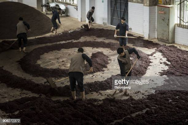 Employees spread out steamed sorghum to cool ahead of fermentation at the Kweichow Moutai Co distillery in the town of Maotai in Renhuai Guizhou...