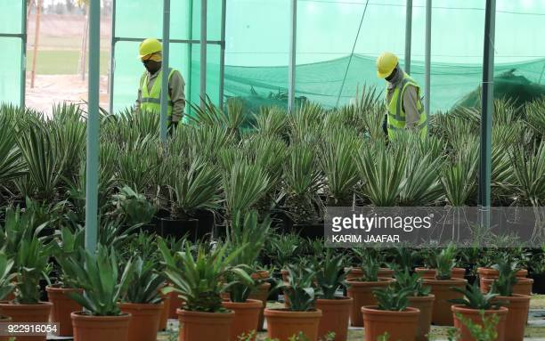 Employees work at the Supreme Committee for Delivery and Legacy Tree Nursery in Doha on February 22 2018 The nursery is growing trees and turf that...