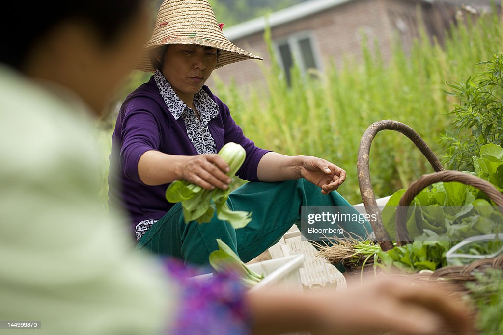 Employees work with produce at a farm that practices organic farming techniques in Beijing, China, on Tuesday, May 22, 2012. China's farmland shrank 8.33 million hectares (20.6 million acres) in the past 12 years, Chen Xiwen, Premier Wen Jiabao's top agriculture adviser, said last year. Photographer: Nelson Ching/Bloomberg via Getty Images