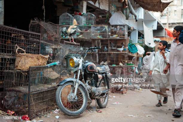 Empress market bird area on Avril 19, 2016 in Karachi, Sindh, Pakistan.