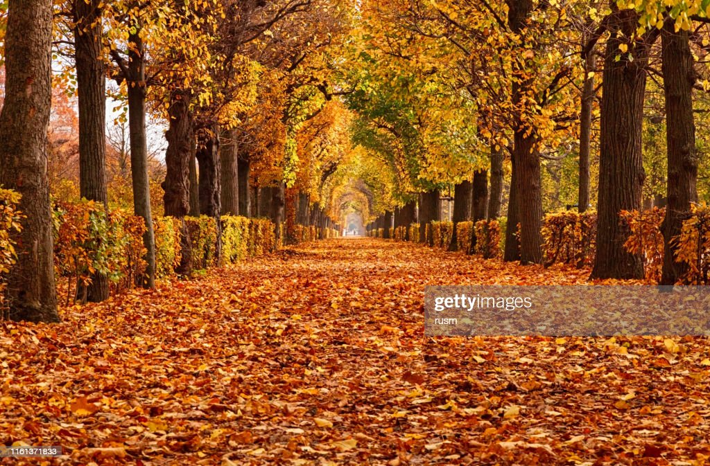 Empty alley covered by foliage in autumn park, Vienna, Austria : Stock Photo