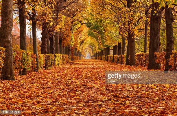 empty alley covered by foliage in autumn park, vienna, austria - autumn falls stock pictures, royalty-free photos & images