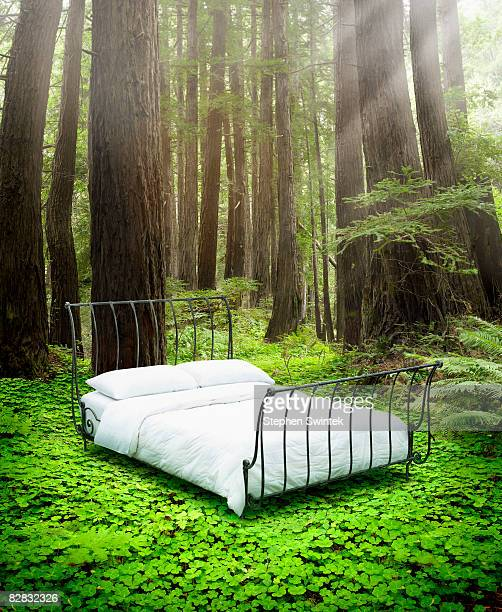 Empty bed standing in bed of clovers in a forest