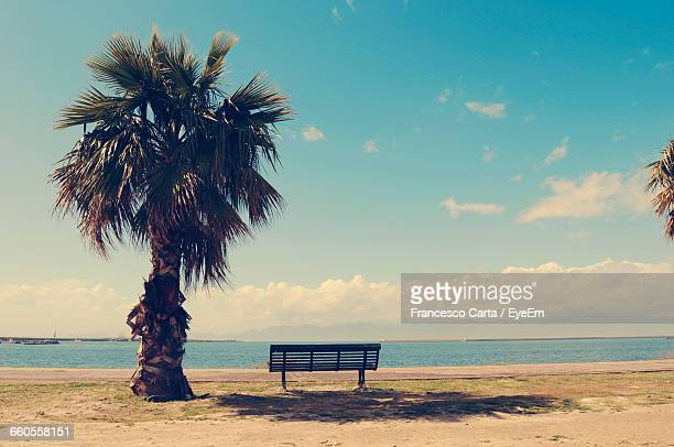 Empty Bench By Palm Tree By Sea Against Sky